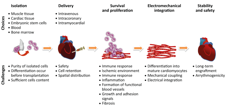 fig3-4-options-and-challenges-in-stem-cell-therapy-for-cardiac-regeneration